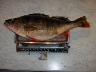 Ahven 1,95 kg