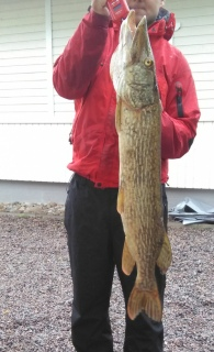 Hauki 5,62 kg