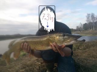 Hauki 7,30 kg