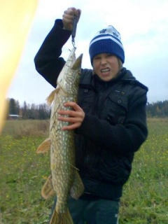 Hauki 3,00 kg