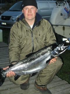 Järvilohi 7,50 kg