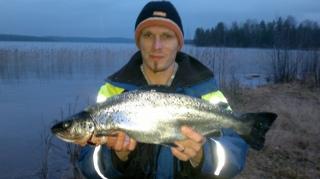 Järvilohi 1,50 kg