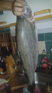Kirjolohi 3,00 kg