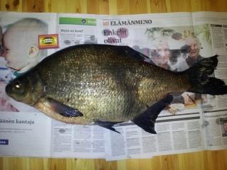 Lahna 3,04 kg