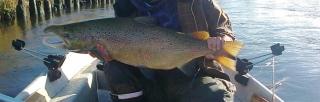 Merilohi 9,10 kg