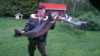 Merilohi 17,00 kg