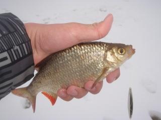 kalat ja jousimies treffi sivuja