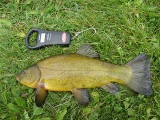 Suutari 1,17 kg Mato-onginta - Tuusulanjärvi