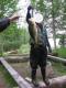 Ahven 1,75 kg