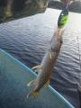 Kuusamon monni uistinta testailin Lahnajärvellä, hauki pääsi kasvamaan kuvauksen jälkeen.
