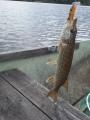 Soutu-uistelua Lahnajärvellä ja Jesse Flash 8cm.