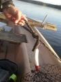 Saatiin kalakaverin kanssa iso saalis 20cm Turus-ukko vaapulla vetouistellen Roineelta. Ilmeisesti jonkun talviverkon painot naruineen päivineen.