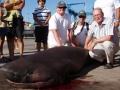"Haikala 350 kg, ;450 cm pituus. Kalastus vene ""Nina del Mar"""