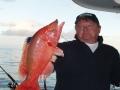 Kaunis Pejeperro tai papukaija kala