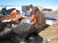 Ammattikalastajien mukana Suomussalmen Kiantajärvellä