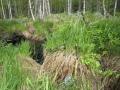 Tammukka Tonko on pieni kala niin on purokin josta niitä saa