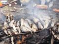 Retkeilyn ja kalastuksen lomassa on mukava paistaa nuotiolla harreja
