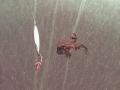 sammakko maaliskuun alkupuolella järven jäällä