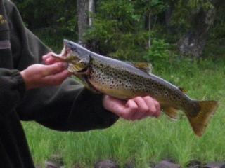Erämaamökkeilyä ja kalastusta