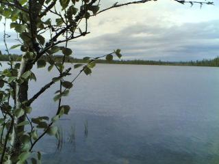 Koivujärvi (Kittilä)