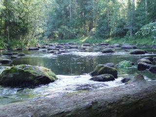 Saavajoki