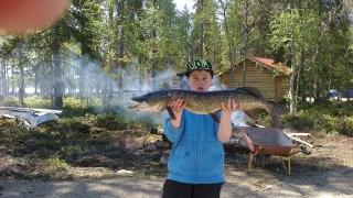 Hauki 3,50 kg