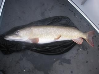 Hauki 9,20 kg