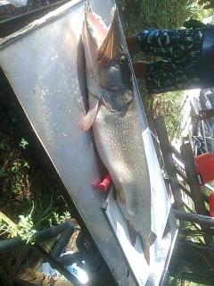 Hauki 10,03 kg