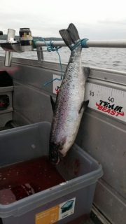 Järvilohi 3,20 kg