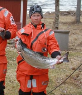 Järvilohi 4,33 kg