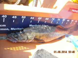 Kuha 1,70 kg