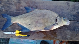 Lahna 1,85 kg
