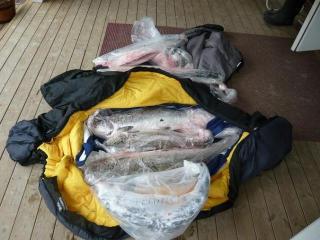 Meritaimen 3,50 kg