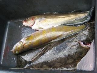 Pallas 2,20 kg