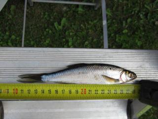 Salakka 65 g