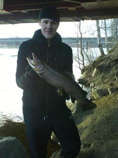 Järvitaimen 1,82 kg