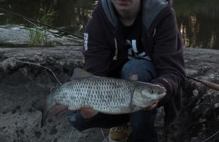 Turpa 1,60 kg