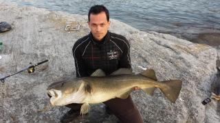 Turska 11,70 kg