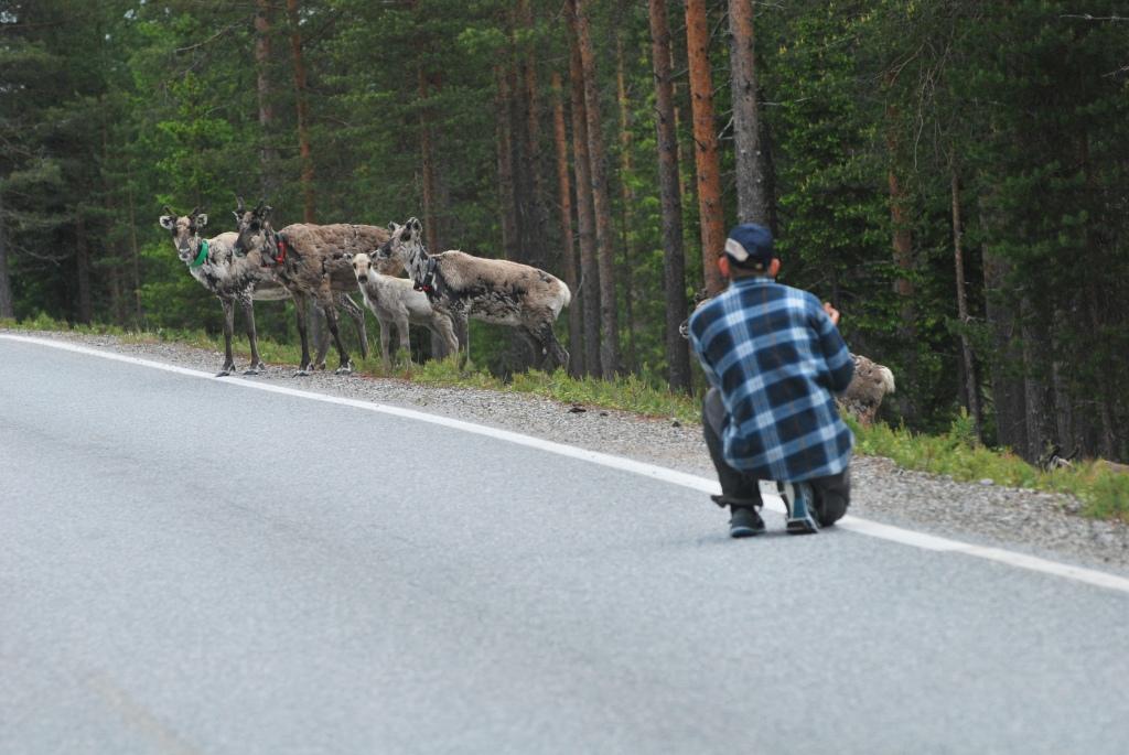 Jamael fiilistelee porojen kanssa Lämsänkylässä(Kuusamo).
