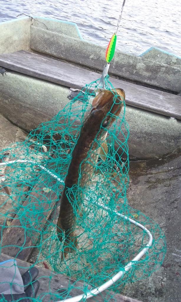 Kuusamon muovikalalippa 18g maistui hauelle.