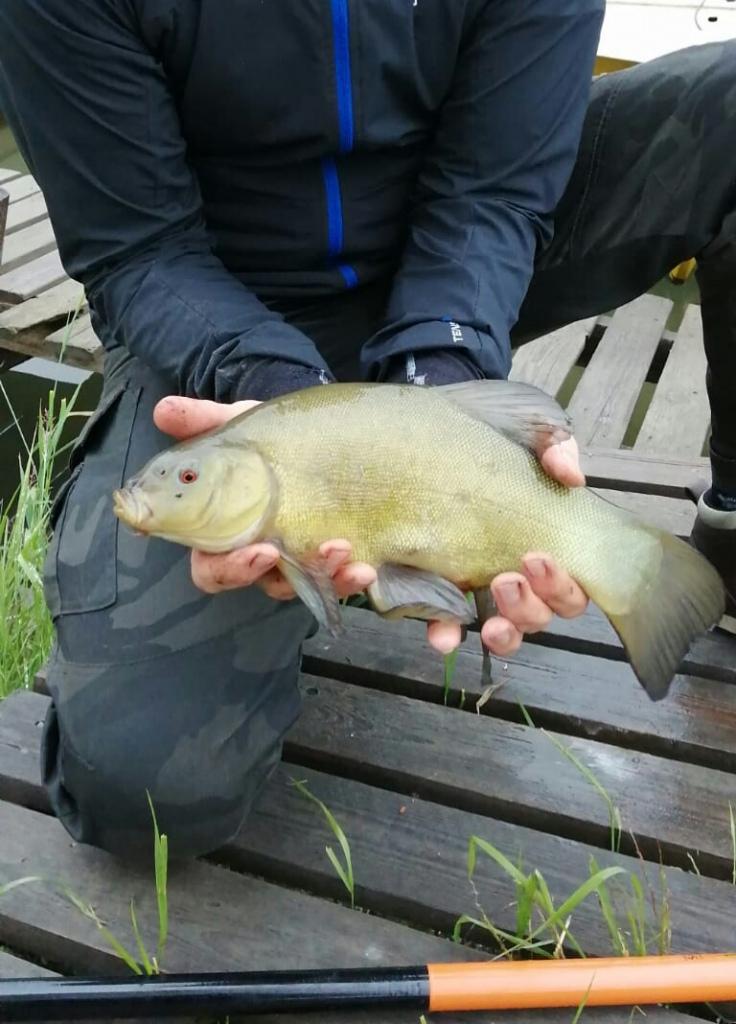 Suutari mato-ongella.Kaunis kala väri ja pyrstö