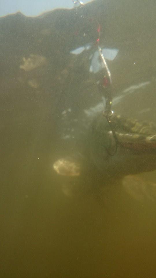 Veden alla tapahtuu (hauki)