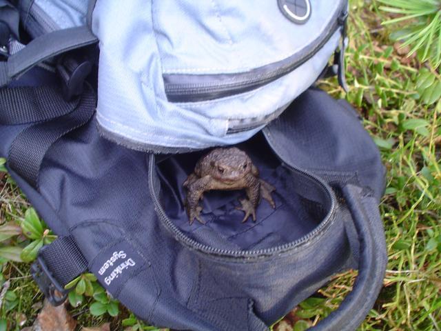 Saku sammakko tuli kaverin reppuun kalareissulla