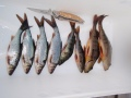 Vuoden ekat onkikalat