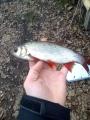 Tunnetteko kalalajia