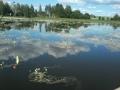 Hieman rehevöitynyt alue Längelmäveden puolella.