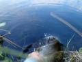 Yritin ottaa hauesta kuvaa, mutta hauki päättikin kastella kalastajan ja kameran litimäriksi. :D