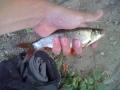 Mikä kala? Veikattiin kaverin kanssa sorvaa.. Otti Salmo Hornettiin