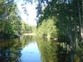 Pikku hauki puro