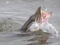 Kala katsoi anovasti, joten saikin vapautensa takaisin...
